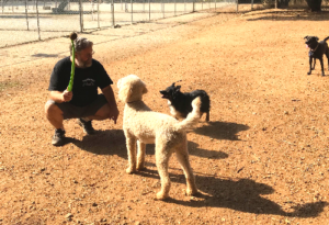 Brian Zimmerman with dogs at dog park